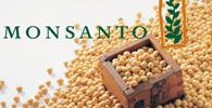 Monsanto pode voltar a cobrar royalties por soja transgênica