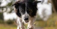 Projeto prevê punições para quem atropelar cães e gatos