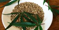 STJ tranca ações penais de importação de pequena quantidade de semente de maconha