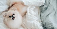 Pet shop é condenado por morte de filhote três dias após compra