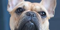 Casal que encontrou cachorro perdido e foi acusado de furto será indenizado