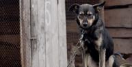 DF: Deputados aprovam projeto que proíbe acorrentamento de animais