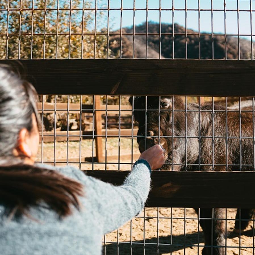 Zoológico de SC é condenado por maus-tratos a animais