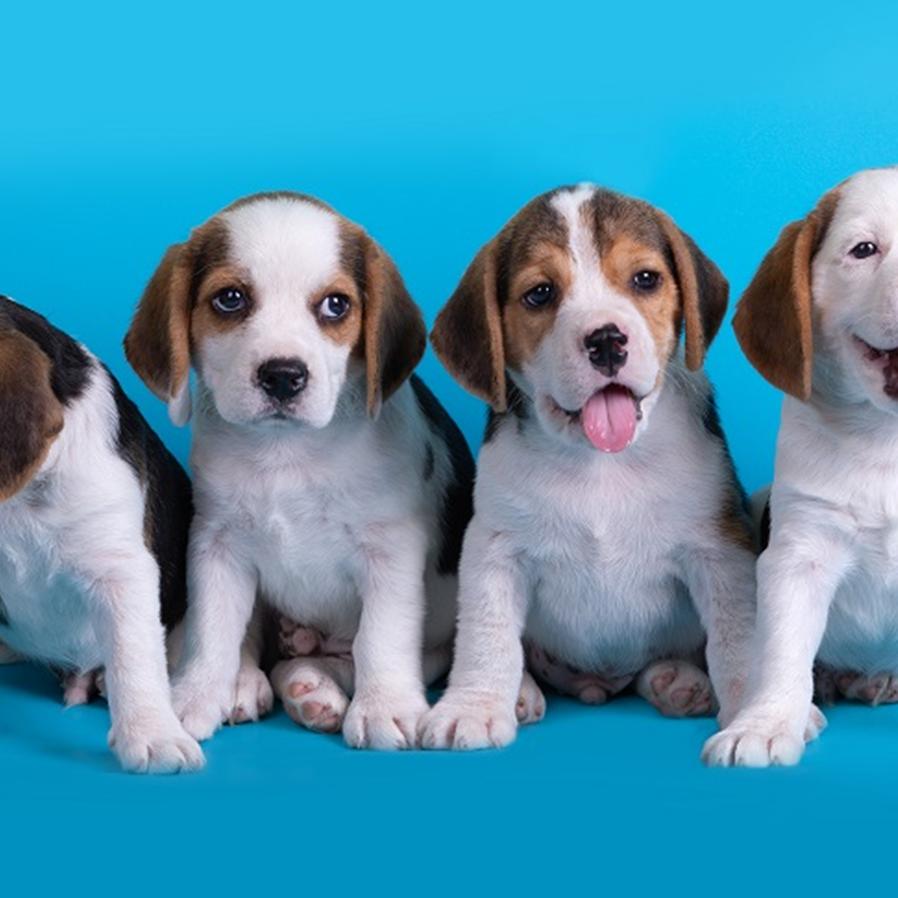 Ex-marido pagará metade das despesas de cães adquiridos no casamento