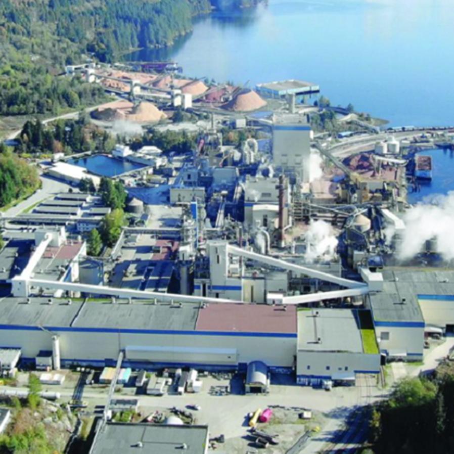 Mercado de celulose no Brasil: um gigante em expansão