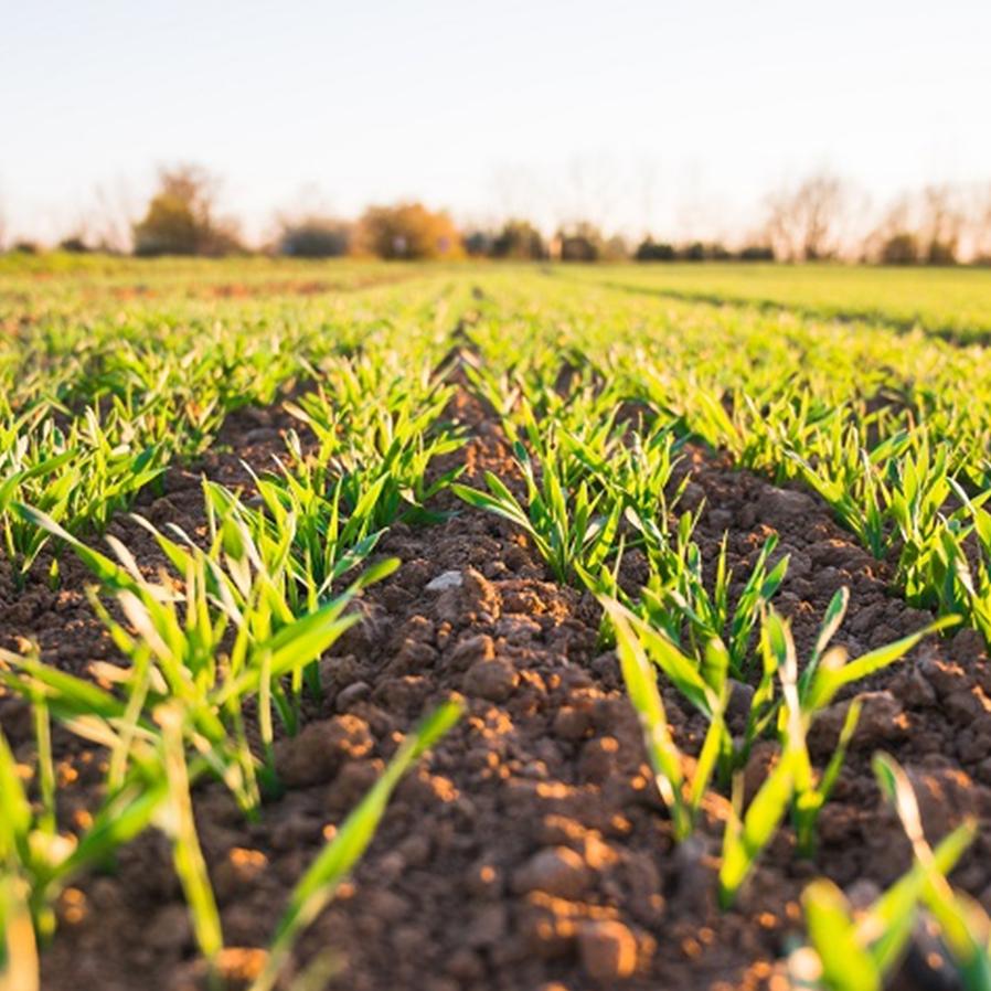 Produtores rurais ficarão em terras até fim de disputa com fazendeira