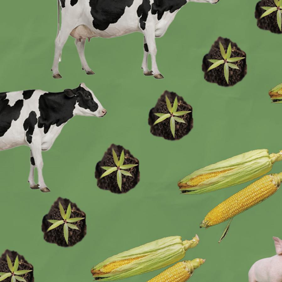 Análise pragmática sobre o uso do contrato futuro no grão de soja e na compra do adubo