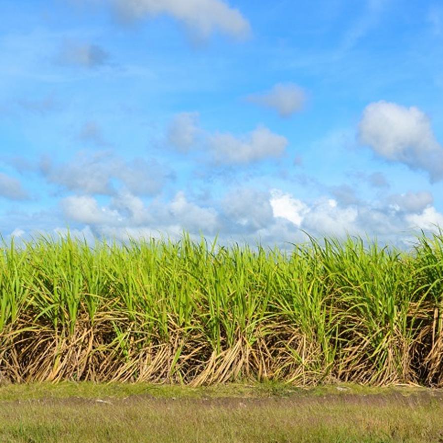 Empresa indenizará por aplicação de fungicida contaminar safra vizinha