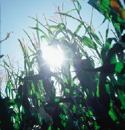 Produtos agrícolas, negociações e contenciosos internacionais: a busca pelo fim dos subsídios distorcivos