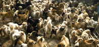 Dona de 23 cães deve reduzir incômodo causado aos vizinhos
