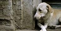 Projeto de lei de SP prevê punição a agressores de animais de estimação