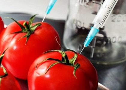 Alimentos transgênicos e o princípio da precaução