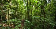 Modificada no Congresso, MP do Código Florestal volta ao Planalto