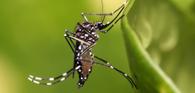 Lei permite ingresso forçado em imóveis para combate à dengue, zika e chikungunya