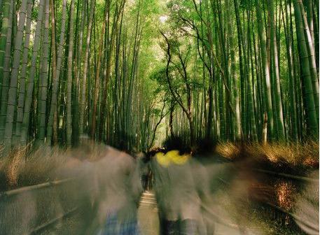meio ambiente; Direito Ambiental; ONG; ecologia
