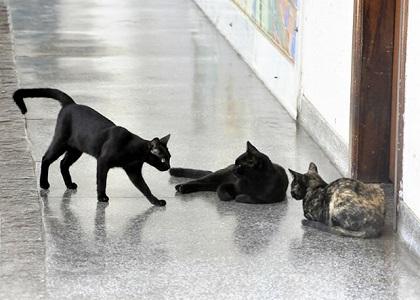 TJ/MT proíbe servidores de alimentar gatos que vivem na unidade judiciária