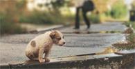 Município de Sorocaba/SP deve resgatar animais de rua