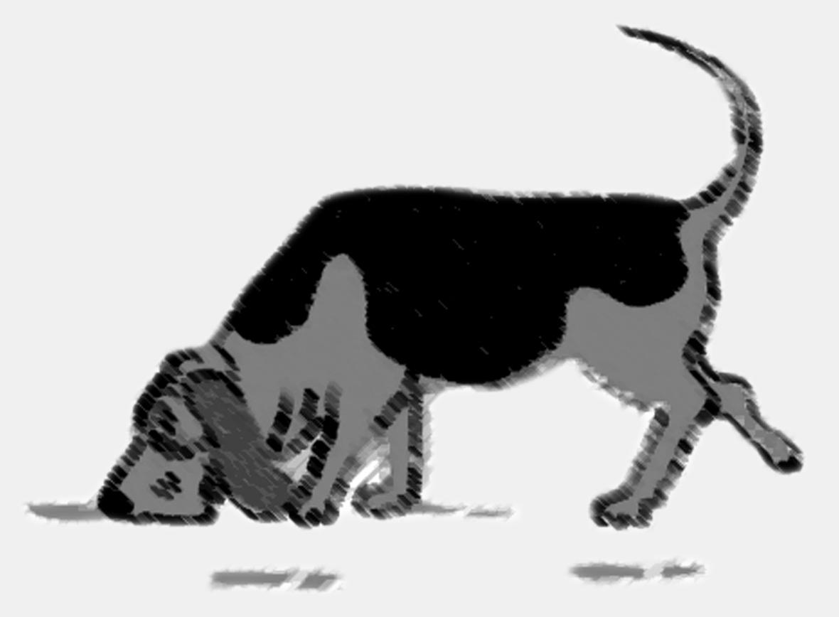 Celular; Cachorro; Câncer; Labrador; Ciência; Simpatia; Casamento; Índia;