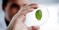 Instituições criticam PL que simplifica regras para pesquisas com recursos genéticos