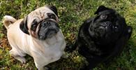Justiça proíbe venda de animais domésticos em vias e praças públicas do DF