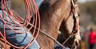 É inconstitucional lei que permite provas de laço e derrubada de animais em Bauru/SP