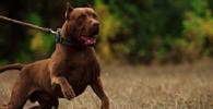 Homem atacado por cão de guarda de construtora consegue majorar indenização