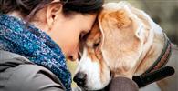 Passageira não será indenizada por transporte de cão de suporte emocional no porão do avião