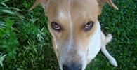 Senado aprova aumento de pena para crime de maus-tratos a animais