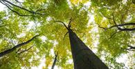 Governo criará fundo privado para gerir recursos de multas ambientais