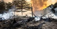 Câmara: Proposta altera prazos em processos sobre crimes ambientais