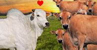 Touro invade propriedade vizinha, fecunda vacas de raça diversa e dono é condenado