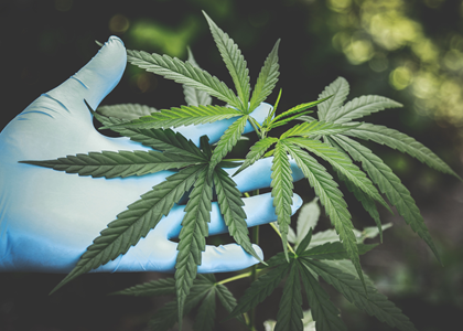 A ciência e a Cannabis Sativa
