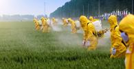 STF suspende aprovação tácita de agrotóxicos prevista em portaria do ministério da Agricultura