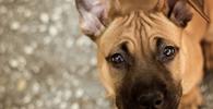 Mulher que invadiu casa para salvar cachorro é absolvida