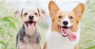 Estabelecimento veterinário é impedido de retomar atividades