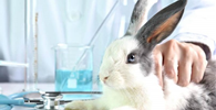STF julga constitucional lei que proíbe animais em testes de produtos no AM