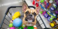 Pet shop não é obrigado a contratar médico veterinário para manter atividades