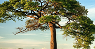 STJ: constitucionalidade de artigo do Código Florestal não significa aplicação retroativa da regra
