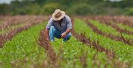 Projeto altera prazo para produtores rurais solicitarem recuperação judicial