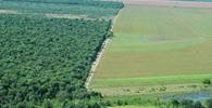 Sentença proferida na égide do Código Florestal revogado deve ser cumprida segundo novo texto