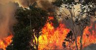 Governo autoriza contratação de brigadas Federais para combate a incêndios florestais