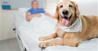 Lei do Paraná que autoriza entrada de animais em hospitais é inconstitucional